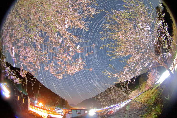Star Trails 15 サクラ