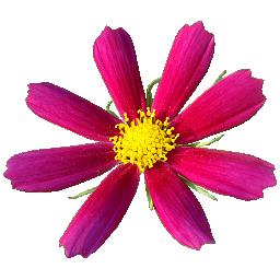 Piapro ピアプロ イラスト Flower 256x256