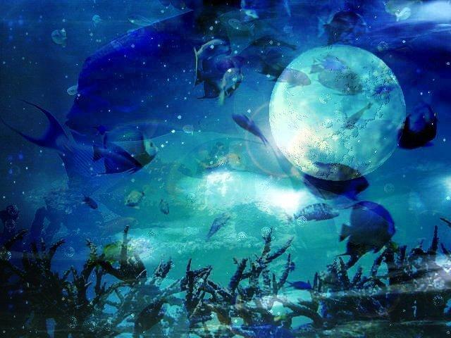 Piaproピアプロイラスト海と月とサカナフリー素材