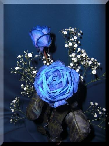 Piaproピアプロイラスト素材青薔薇とカスミソウ
